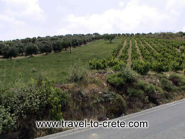 CRETE LAND - The ancient products of Crete: Olive oil and wine