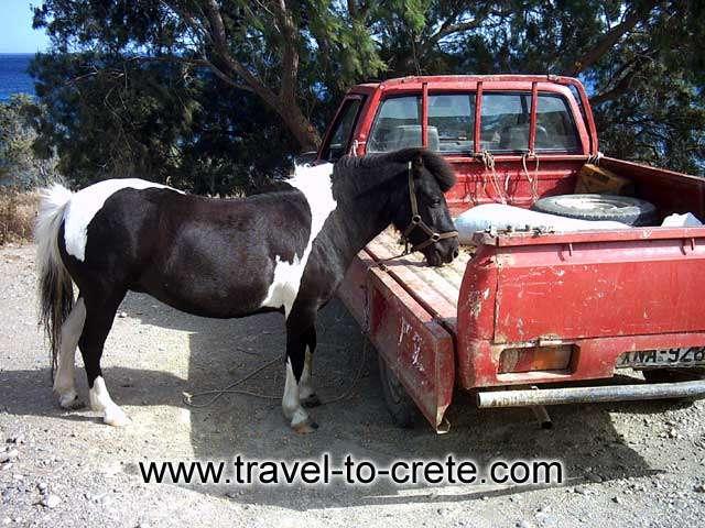 PALEOHORA - A pony horse eating in Paleohora