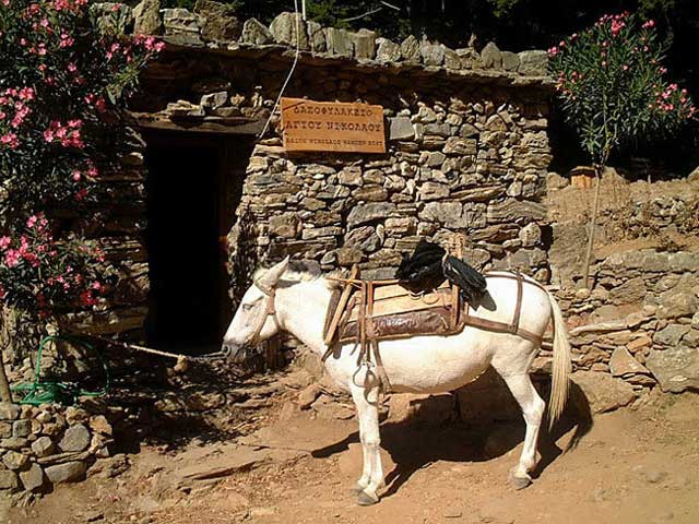 Donkey - In Creta the famous Gorge of Samaria that needs 6 to 7 hours to walk it from the high point to the sea. I you have to stop for any reason you can't go back, so you can continue riding this kind of lovely donkey. by Alain Boccard